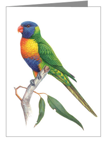 Rainbow Lorikeet Gift Card