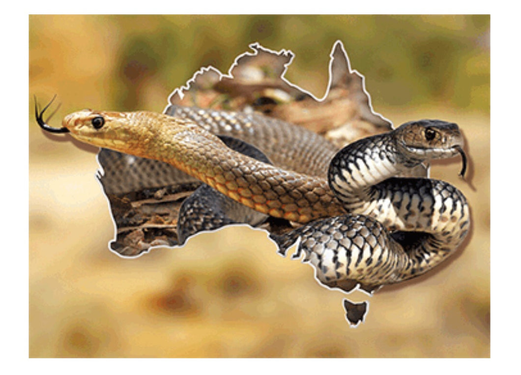 Snake Country 3D A3 Placemat