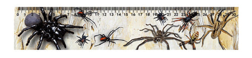 Spiders 3D Ruler