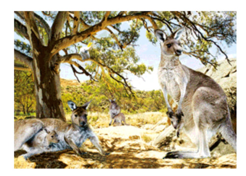 Kangaroos in Shade 3D Magnet