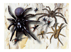 Spiders 3D Magnet