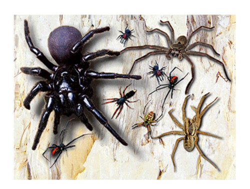 Spiders A3 3D Placemat
