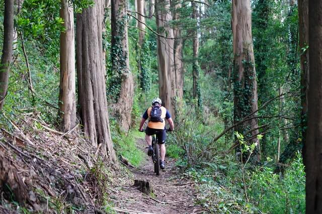 Person cycling through the forest