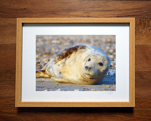 'Selsey Seal'  Framed Print