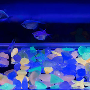 Luminous Decorative Sea World Figurines