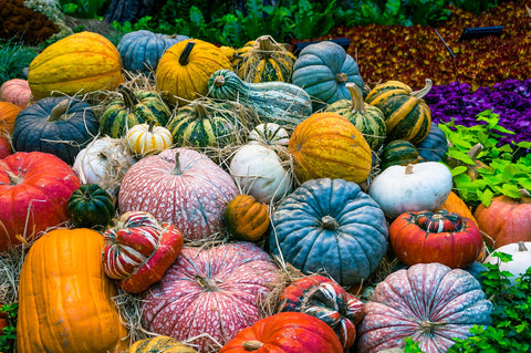coloured pumpkins
