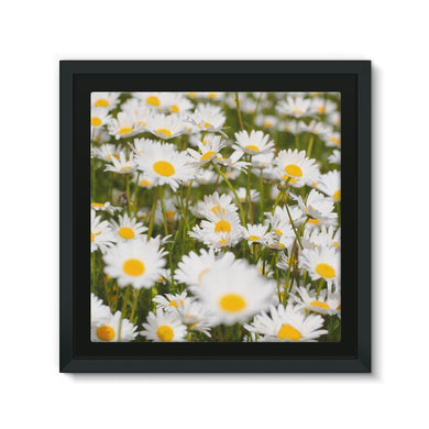 Daisy Framed Eco-Canvas