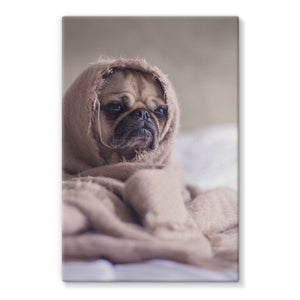 Pug Stretched Eco-Canvas