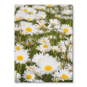 Daisy Stretched Eco-Canvas