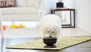 Small dog eats from an elevated dog bowl