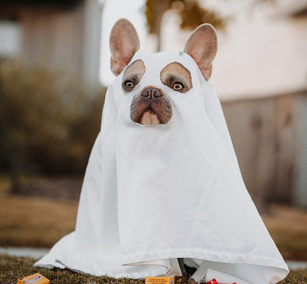 Dog in ghost cosume