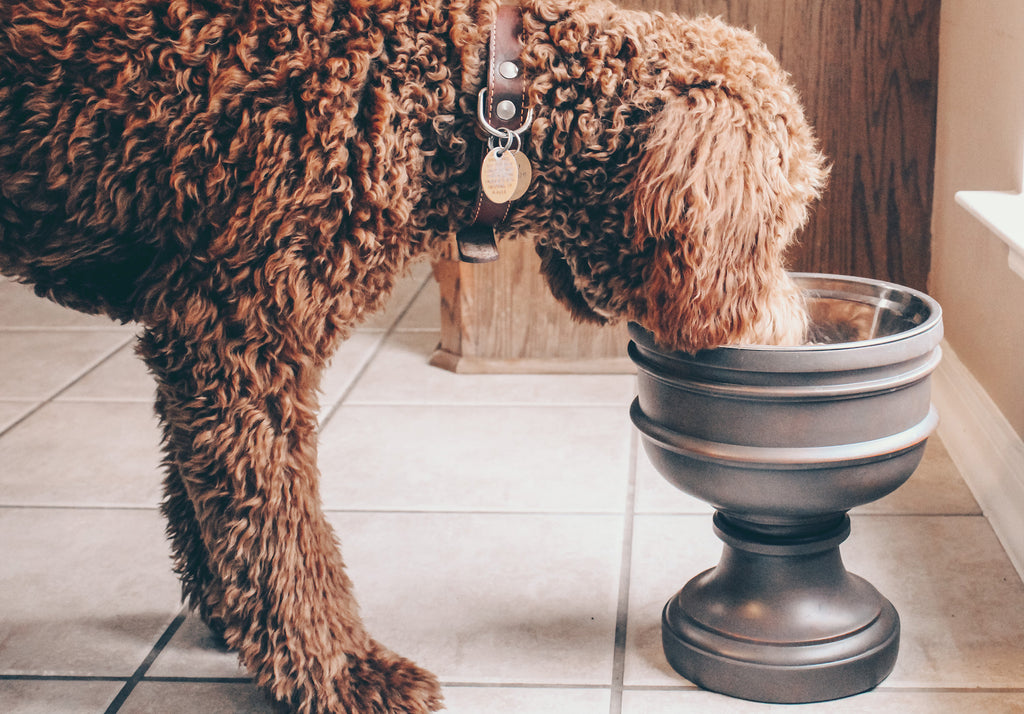 Dog eating out of large Summit bowl