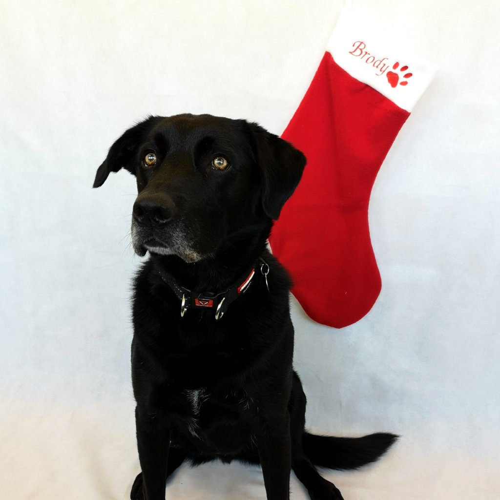 Red Christmas Pet Stocking