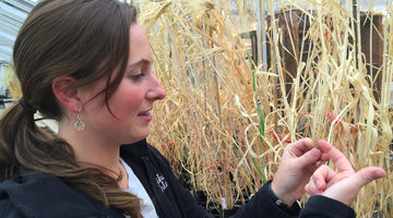 Women Grow New Barley Strains at OSU