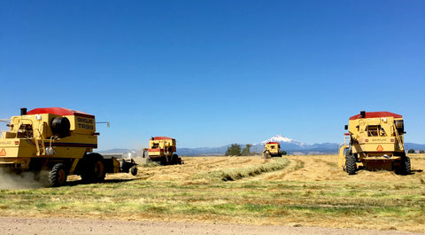 New Holland Combines Harvesting Grass Seed on Mecca Grade Farms in Madras, Oregon