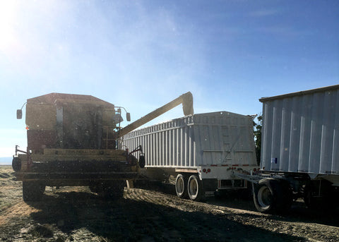 New Holland Combine Unloading Grass Seed on Mecca Grade Farms in Madras, Oregon
