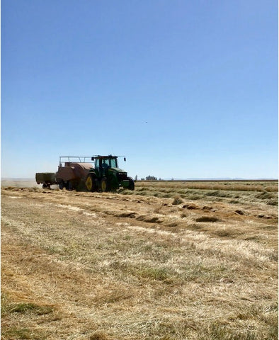 Baling Kentucky Bluegrass Straw on Mecca Grade Growers in Madras, Oregon
