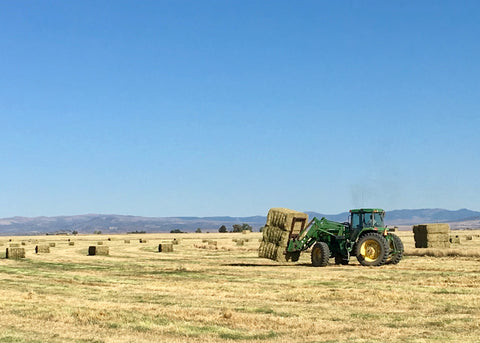 John Deere tractor stacking Kentucky Bluegrass hay bales on Mecca Grade Growers farm in Madras, Oregon.