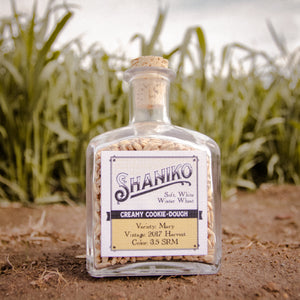 """Shaniko"" (White Winter Wheat)"