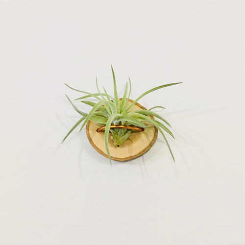 """Air Plant Magnet"""