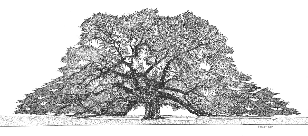 Angel Oak Print - wide view