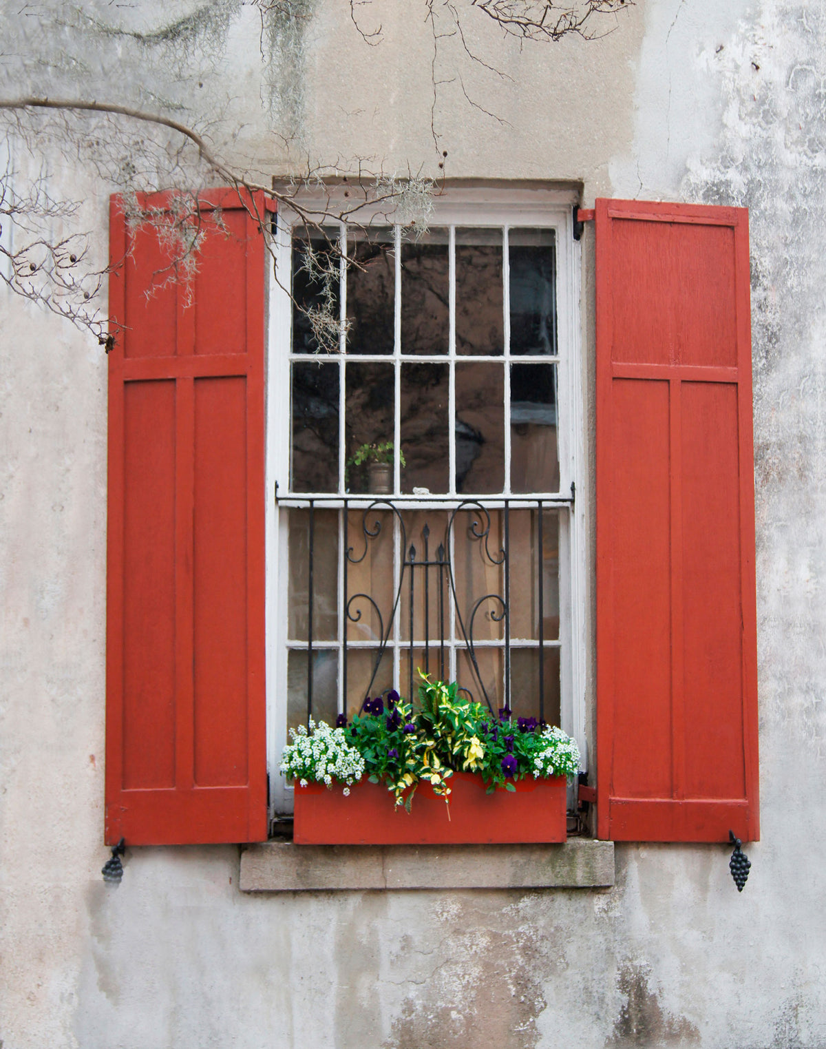 Charleston Windowboxes  Red shutters with branch