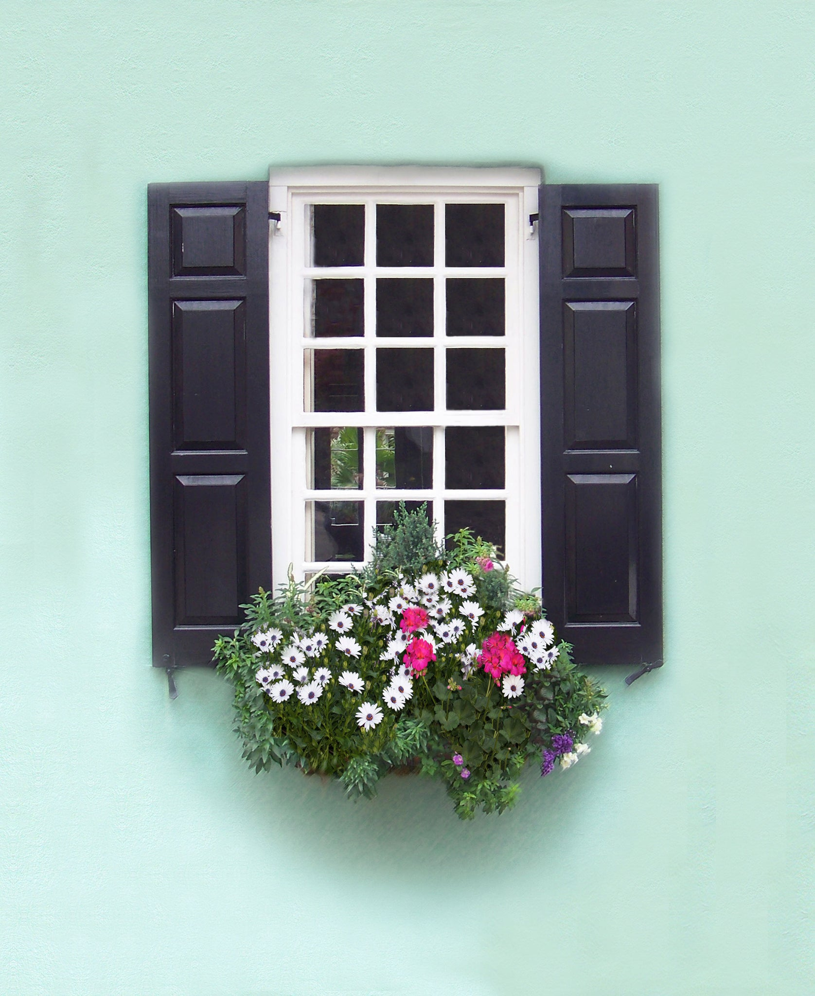Charleston Windowboxes  Seaglass green wall with white flowers