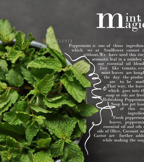 It's all about Mint Magic!