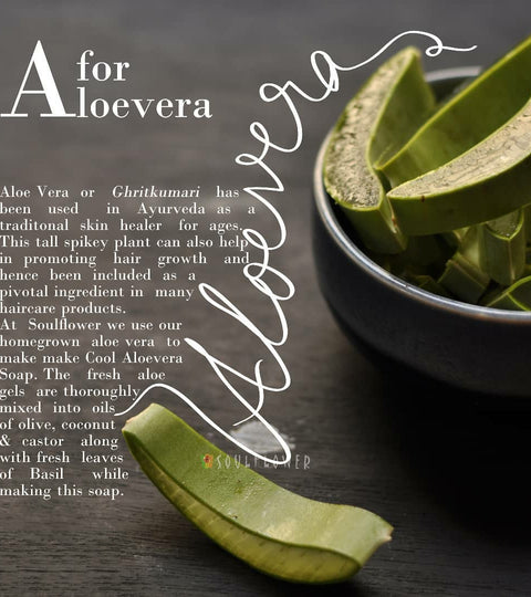 A for the Amazing Aloe Vera!