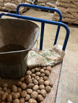 Seed Potatoes for Planting 'Maris Piper' Variety (Free UK Postage)