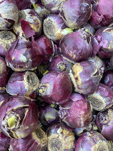 10 x Hyacinth orientalis Bulbs (Delfts blue) Free UK Postage