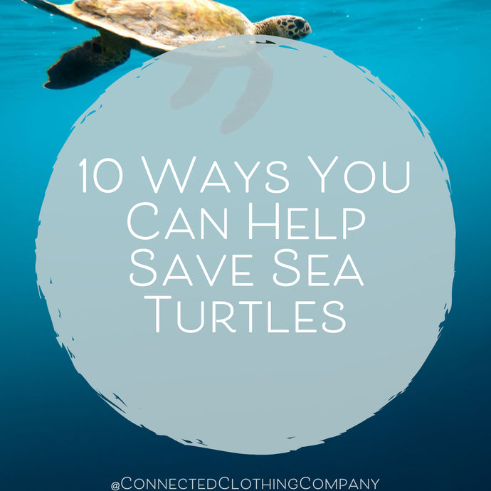 10 Ways You Can Help Save Sea Turtles
