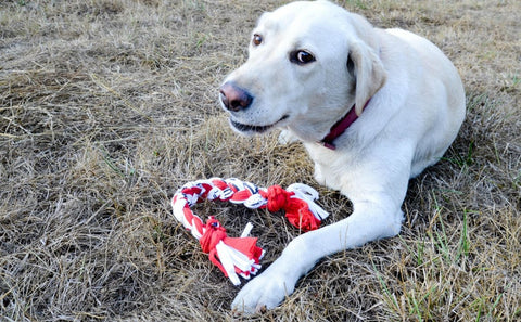 Create a quick and fun toy for your pup from used t-shirts