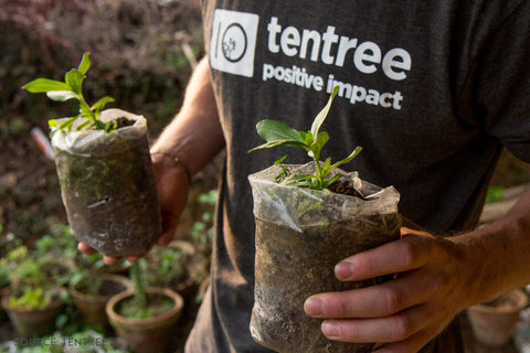 Tentree Member Planting Trees - Connected Clothing Company Blog - 7 Eco-friendly Companies That Give Back To The Planet