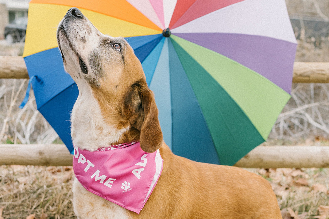 "dog outside with bandana that says ""Adopt Me"" - Connected Clothing Company - Ethically and Sustainably Made - 10% donated to the Society for the Prevention of Cruelty to Animals"