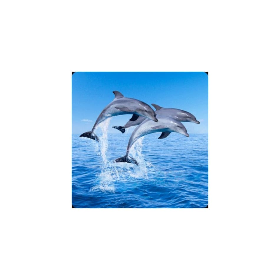 3d magnets dolphins general merchandise $4.95