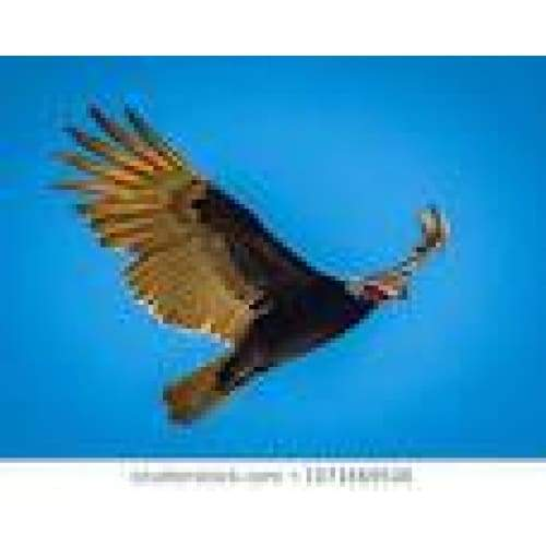 3D Postcard California Condor Standard General Merchandise $4.95
