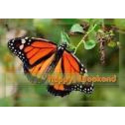 3D Postcard Monarch Standard General Merchandise $4.95