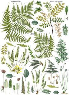 "Fronds Botanical - Transfer - 24""x 33"""