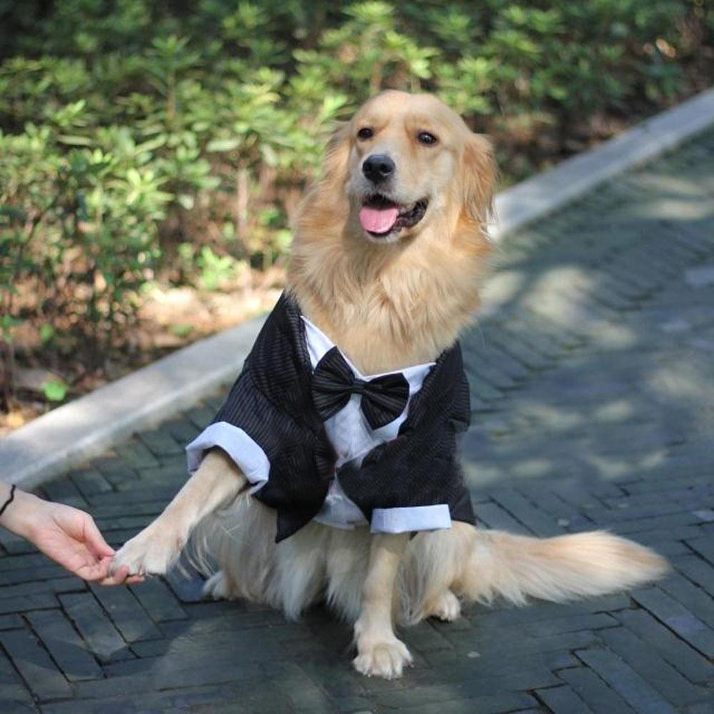 Big Dog Coats Clothing Tuxedo Striped Large Gentleman Wedding Suit ...