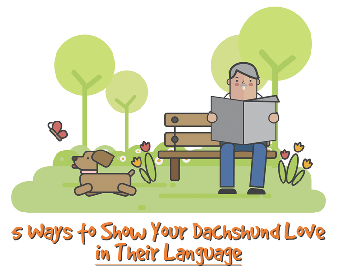 Infographics: 5 Ways to Show Your Dachshund Love in Their Language