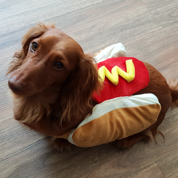 Hot Dog Pet Dog Halloween Event Costume