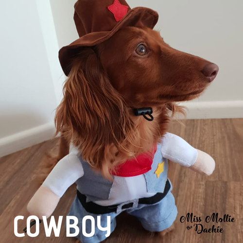 Dachlove.com Cowboy in Town Costume, costume- Dachshundloversonline  brings together dachshund merchandise, original and unique designed sausage dog gifts, accessories from all around the world.  The perfect addition to your dachshund loving home.  Find it in one store where you can buy them online and free shipping worldwide to your doorstep.