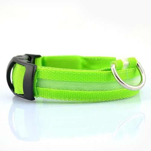 Dachlove.com Dach Love Safety LED Glow Nylon Collar Bright Green, collar- Dachshundloversonline  brings together dachshund merchandise, original and unique designed sausage dog gifts, accessories from all around the world.  The perfect addition to your dachshund loving home.  Find it in one store where you can buy them online and free shipping worldwide to your doorstep.