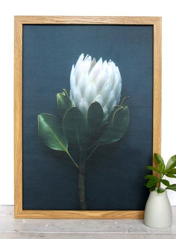 Cloud Nine Creative King Protea - White