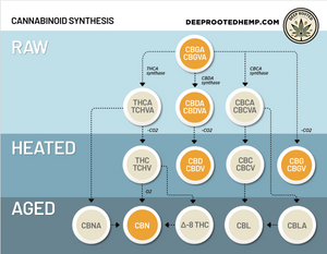 Know your Cannabinoids- Cannabigerol (CBG)