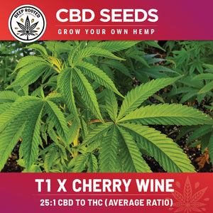 T1 x Cherry Wine Feminized Seed 10 Pack