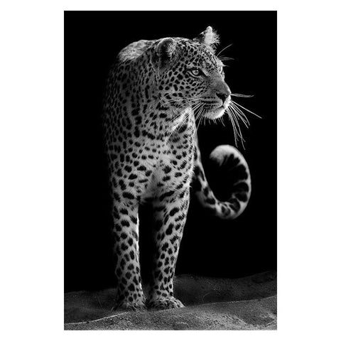 The Finest African Animal Wall Art Prints (50x70cm) - Fansee Australia