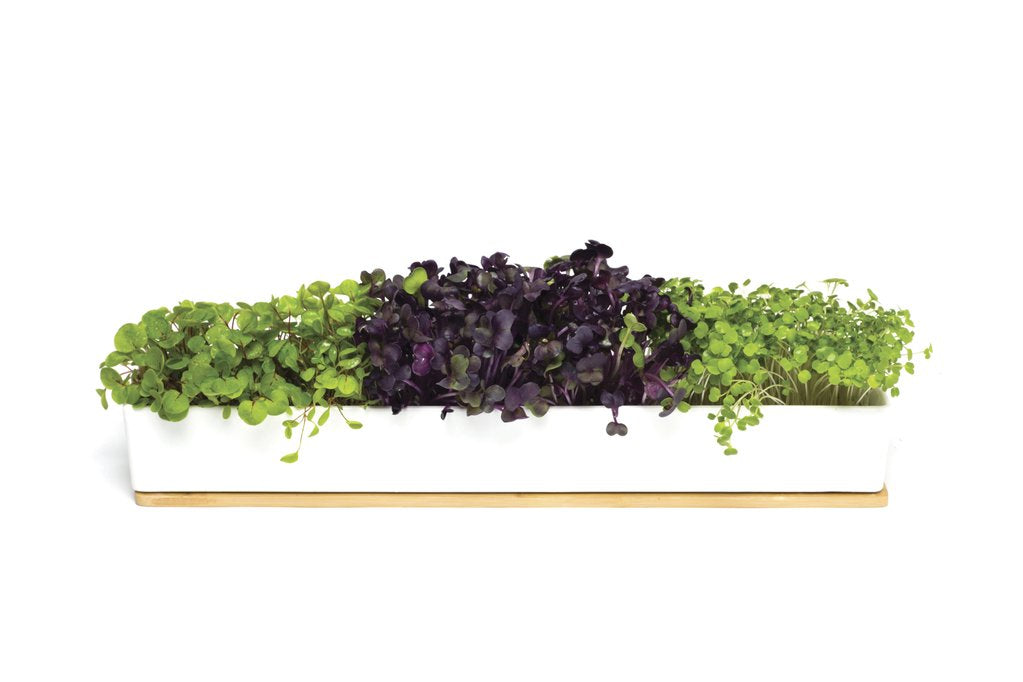 Micro Greens - Rocket, Broccoli, Radish