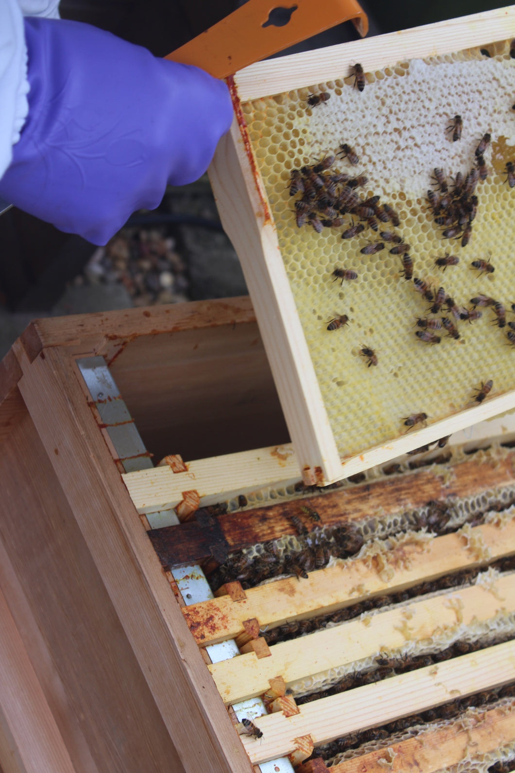 Start A Honey Business 5 x National Beehives With Buckfast Bees